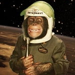 "Space Chimp, ""Ham"""
