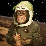 """Space Chimp, """"Ham"""""""